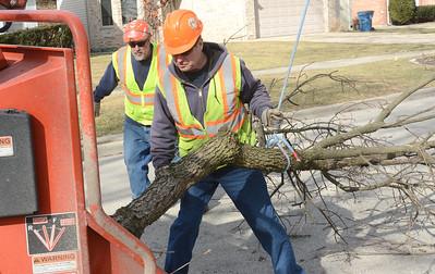 Emerald ash borer infestation still effecting Elmhurst trees