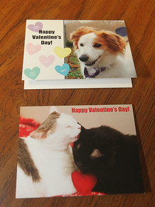 Candace H. Johnson-For Shaw Media For a $15 donation, Save-A-Pet will mail a personalized card to someone special with either a dog or 2 cats on it, for Valentine's Day. (2/5/19)