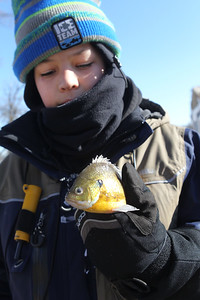 Candace H. Johnson-For Shaw Media Dean Brewer, 13, of Antioch holds on to the bluegill perch he just caught during the 59th Annual Chain O' Lakes Ice Fishing Derby and Winter Festival at Turtle Beach on Channel Lake in Antioch. The event was sponsored by the Northern Illinois Conservation Club. (2/9/19)