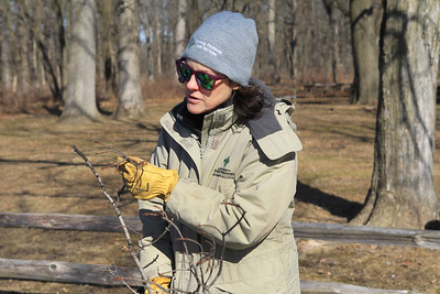 Candace H. Johnson-For Shaw Media Jen Berlinghof, environmental educator, talks about a branch from a sugar maple tree during the Lake County Forest Preserves behind-the-scenes tour of the Maple Syrup Hikes at the Ryerson Conservation Area in Riverwoods. The Maple Syrup Hikes run for three weekends in March: March 7-8, 14-15, 21-22, from 12-2:00 pm. every half-hour. Visitors must register for the event. (2/19/20)