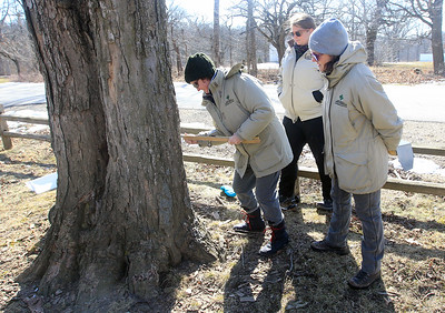 Candace H. Johnson-For Shaw Media Eileen Davis, of Lindenhurst stands next to Christy Condon, of Palatine and Jen Berlinghof, of Chicago, all environmental educators, as she puts a spile into a sugar maple tree to collect sap during the Lake County Forest Preserves behind-the-scenes tour of the Maple Syrup Hikes at the Ryerson Conservation Area in Riverwoods. The Maple Syrup Hikes run for three weekends in March: March 7-8, 14-15, 21-22, from 12-2:00 pm. every half-hour. Visitors must register for the event. (2/19/20)