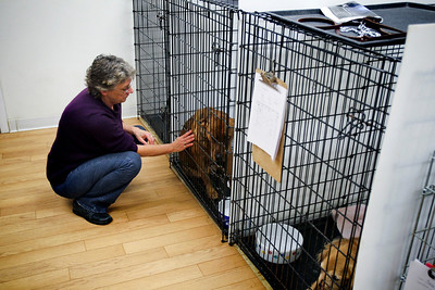 Jenny Kane - jkane@shawmedia.com Deb Klein takes a break from cleaning cages to pet one of the recent transport dogs. The dogs were recovering from being spayed and neutered earlier that day. Klein volunteers at the Helping Paws animal shelter in Woodstock every monday and friday.