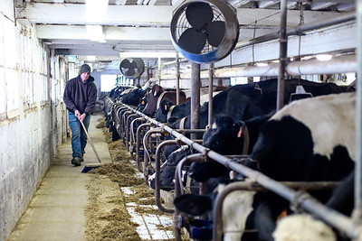 Lauren M. Anderson - landerson@shawmedia.com David Vanderstappen, a dairy and cattle farmer on his family-owned farm in Hebron, clears the leftover feed in order to put more out for the cows evening feeding on Tuesday. (1/17/2012)