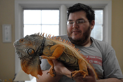 Robert Delany, of Naperville, holds his iguana, Mongo, at his home on Tuesday, Jan. 22, 2013. Delany is a member of the Windy City Reptiles Club, which will have a booth during the second annual Repticon at the Kane County Fairgrounds on Jan. 26 and 27. Matthew Piechalak— mpiechalak@shawmedia.com.