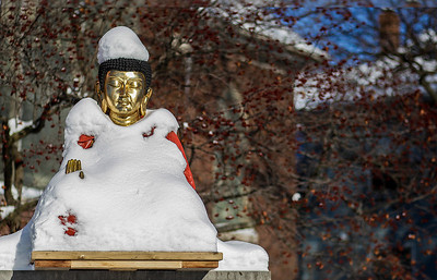Kyle Grillot - kgrillot@shawmedia.com   A snow covered Gautama Buddha statue Thursday in front of the Blue Lotus Buddhist Temple and Meditation Center in Woodstock.