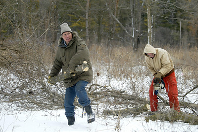 H. Rick Bamman -hbamman@shawmedia.com The Land Conservancy of McHenry County volunteers Ted Thorton (right) of Crystal Lake cuts a Box Elder tree apart as Jim Thompson of Harvard tosses a log on the burn pile. The two were working with other volunteers clearing brush and trees at the Crowley Sedge Meadow east of Harvard on Wednesday, Jan. 15, 2014.