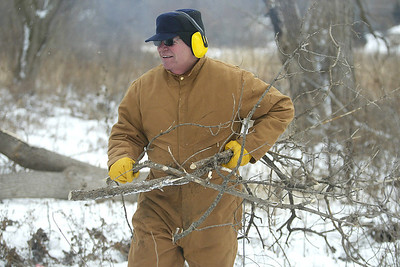 H. Rick Bamman - hbamman@shawmedia.com The Land Conservancy of McHenry County volunteer clears branches from the Crowley Sedge Meadow work site near Harvard on Wednesday, Jan. 15, 2014.