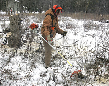 H. Rick Bamman - hbamman@shawmedia.com The Land Conservancy of McHenry County  land stewardship specialist Melissa Hormann (cq)  trims on-native species brush at the Crowley Sedge Meadow near Harvard on Wednesday, Jan 15, 2014.