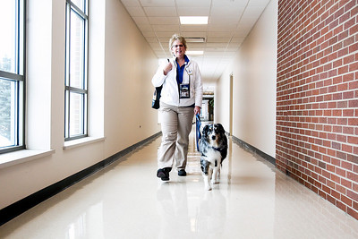 Sarah Nader- snader@shawmedia.com Pam Magnuson walks down the hallway at Centegra Hospital in McHenry with her three-year-old Australian Shepherd, Annie, Friday, January 24, 2014. Magnuson and Annie work with Caring Paws, an animal therapy program out of Centegra. Once a week they visit people in the same-day surgery waiting room as week as nurses and technicians.