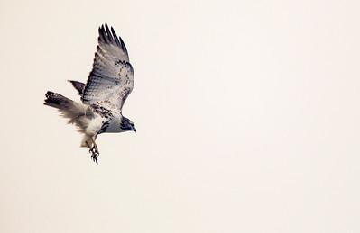 Hnews_2A_adv_bird_1.jpg