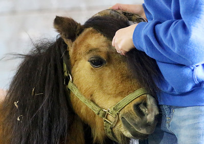 hnews_adv_mini_horses_03