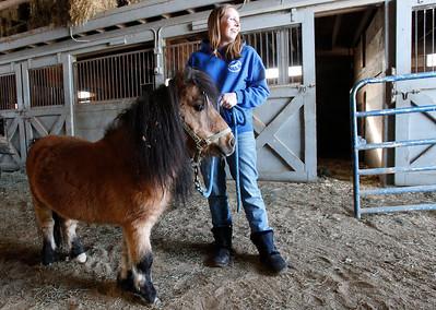 hnews_adv_mini_horses_01