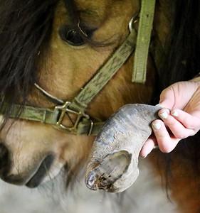 hnews_adv_mini_horses_02