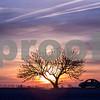 dnews_0107_SunriseStandalone