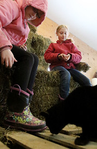 hnews_sat0123_barn_cats_06