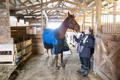 hnews_asv_marengo_horses8.jpg