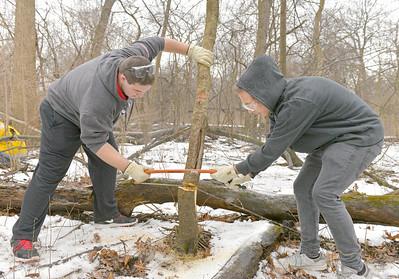 Bob Mann Woods in La Grange Park site of habitat restoration as part of Amphibians Great Lakes Action Days