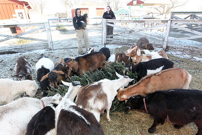 LCJ_111_Lambs_Christmas_Trees_E