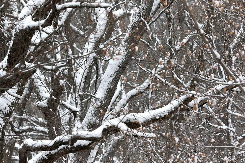 hnews_tue0116_snow_event5