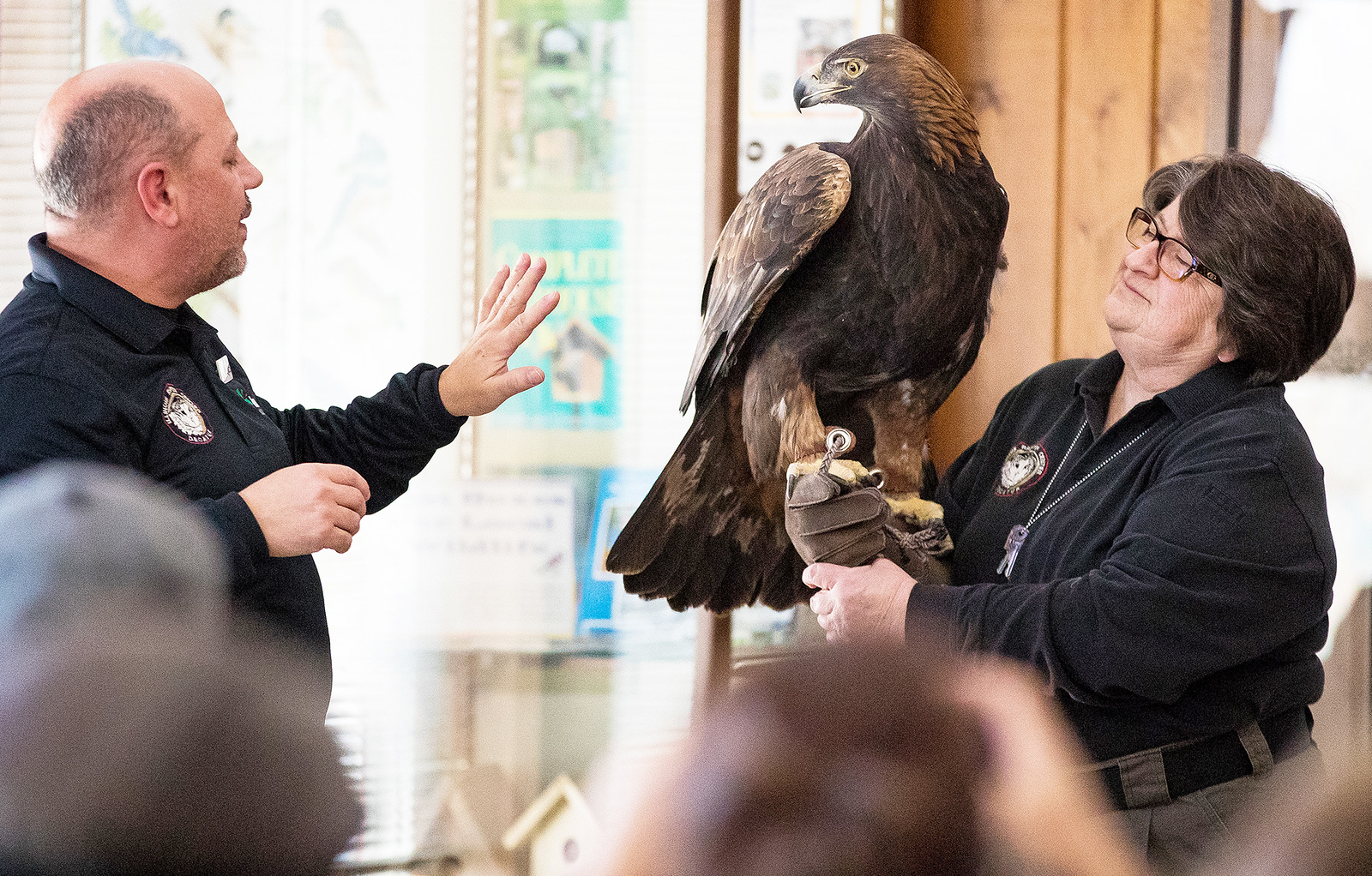 Whitney Rupp for Shaw Media Jacques Nuzzo, left, and Jane Seitz of the Illinois Raptor Center with Phonenix, a golden eagle, at Prairieview Educational Center in Crystal Lake Saturday, Jan. 20.
