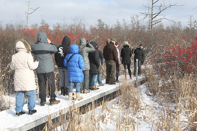Candace H. Johnson-For Shaw Media Volunteer Julia Denne, of Arlington Heights, (on the right) leads a tour on a floating walkway through the Volo Bog during WinterFest at the Volo Bog State Natural Area on Brandenburg Road in Ingleside. (1/13/19)