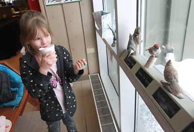 Candace H. Johnson-For Shaw Media Madelyn Rodriguez, 6, of Round Lake sips some hot chocolate as she looks at the different wooden birds in the window at the Visitor Center during WinterFest at the Volo Bog State Natural Area on Brandenburg Road in Ingleside. (1/13/19)