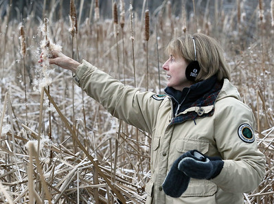 Candace H. Johnson-For Shaw Media Nancy Vanden Berge, of Long Grove, volunteer naturalist, stops to talk about the native species of cattails and shakes a stalk to highlight the seeds that can disperse in the wind during Walk with a Naturalist at Grant Woods on West Monaville Rd. in Ingleside. (1/4/20) The next Walk with a Naturalist will be at the Greenbelt Forest Preserve in North Chicago on Saturday, February 1st, from 9-10:30 am. Everyone will meet at the Greenbelt Cultural Center. The walks are hosted by the Lake County Forest Preserves.