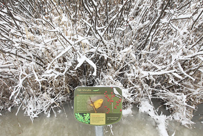 Candace H. Johnson-For Shaw Media A sign identifying tall shrubs including Winterberry Holly and Poison Sumac was seen on a Bog Tour during WinterFest at the Volo Bog State Natural Area in Ingleside. (1/12/20)