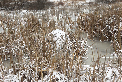 Candace H. Johnson-For Shaw Media A muskrat lodge made of cattails was highlighted and discussed on a Bog Tour during WinterFest at the Volo Bog State Natural Area in Ingleside. (1/12/20)