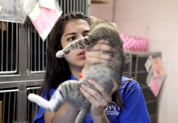 Kunza Shakil plays with an 8-week-old kitten at Anderson Animal Shelter in South Elgin Monday afternoon.