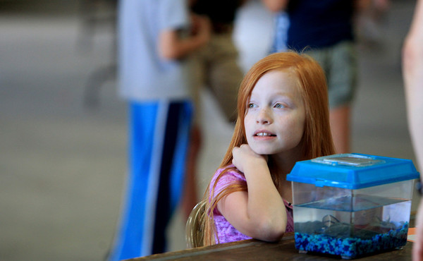 Ashley Werner, 10, of Fox Valley Saddle 'n Spur 4-H sits with her African clawed frog, Diana, as she waits for judging to begin for small pets at the Kane County Fairgrounds.