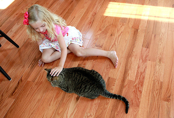 Abigail Lechocki, 6, plays with Wilson, the family's cat who was rescued following a fire at their Sugar Grove home in 2011.