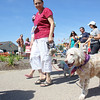 Linda Thome walks her 6-year-old English Setter Tessa during the Pet Parade at Windmill City Festival in downtown Batavia on Saturday. During the contest portion of the pet parade, Tessa won the award for Most Spots.