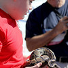 Jack Morris, 13, of Batavia, shows off Sniper, his pet bald python, at the Windmill City Festival Pet Parade in downtown Batavia on Saturday. Morris entered Sniper into the Most Unusual Pet category, along with Conner, his pet bearded dragon who took home top prize in the Most Unusual Pet category.