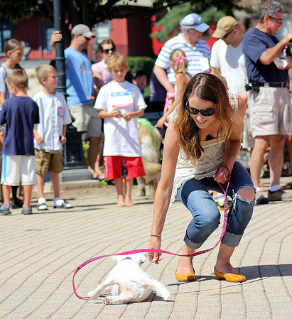 Aspen, a Jack Russell Terrier, rolls over for owner Jenny Bradley of Batavia during the Windmill City Festival Pet Parade competition in downtown Batavia on Saturday. The Windmill City Festival closes on Sunday.
