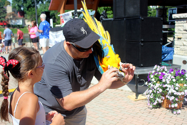 Terry Chechakl of Batavia and his 20-year-old pet blue and gold Macaw Pito demonstrate Pito's ability to flip at the Windmill City Festival Pet Parade in downtown Batavia on Saturday. The Windmill City Festival opened on Friday and will close on Sunday.