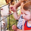 Aspen Tempel, 3, of Elgin, walks into the petting zoo at the Kane County Fair Thursday in St. Charles.