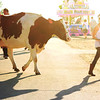 A cow is led across the path during the second day of the Kane County Fair in St. Charles Thursday.