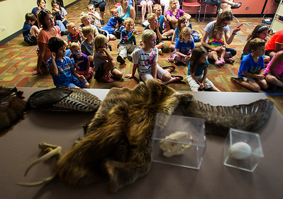 Kyle Grillot - kgrillot@shawmedia.com   The remains of native animals are displayed on a table during the Animals of McHenry County presentation at the Crystal Lake Public Library given by McHenry County Conservation District Wildlife Resource Specialist Beth Gunderson Tuesday, July 23, 2013. The presentation gives children and parents the opportunity to learn more of the history of animals in the region as well as meet a special visitor, Rae the Blanding's turtle.