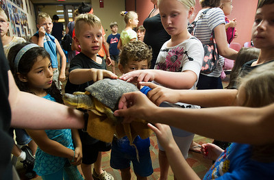 Kyle Grillot - kgrillot@shawmedia.com   Children pet Rae the Blanding's turtle during the Animals of McHenry County presentation at the Crystal Lake Public Library given by McHenry County Conservation District Wildlife Resource Specialist Beth Gunderson Tuesday, July 23, 2013. The presentation gives children and parents the opportunity to learn more of the history of animals in the region, covering issues of extinction and the current status of native animals, as well as meet this special visitor.