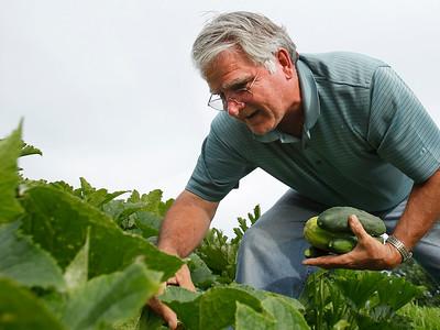 2A_adv_Cucumber_Harvest