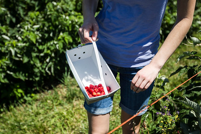hnews_sat0709_raspberries2.jpg