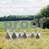 dnews_Cover_0706_FreeRange