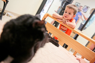 Michelle LaVigne/ For Shaw Media Three-year-old Mason Schaedel of Crystal Lake checks out Jackson, one of the cats available for adoption during McHenry County Animal Control's Clear the Shelter event , on Saturday, July 23rd, 2016. Schaedel's family later decided to adopt Jackson.