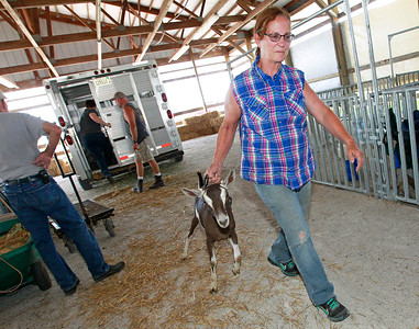 Candace H. Johnson Linda Pfister, of Chana, gets one of her show goats into a pen after arriving at the Lake County Fair in Grayslake.