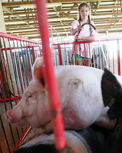 Candace H. Johnson Isabella Yarc, of Libertyville, with Yarc Farms hoses down her pigs after putting them into their pens before the start of the Lake County Fair in Grayslake.