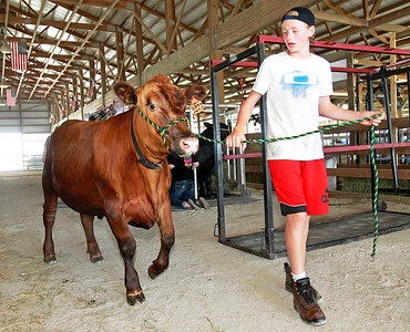 Candace H. Johnson Mason Reckamp, 14, of Crystal Lake moves his steer into a pen before the start of the Lake County Fair in Grayslake.