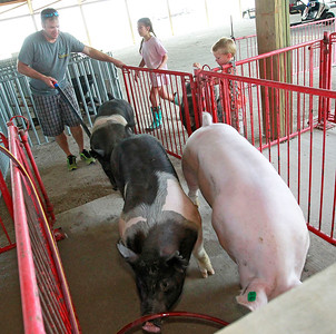 Candace H. Johnson Andy Yarc, of Libertyville stays close to his kids, Isabella, 9, and Owen, 4, as he gets his pigs into their stalls before the start of the Lake County Fair in Grayslake.