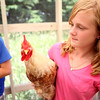 knews_thu_629_ELB_chickens3