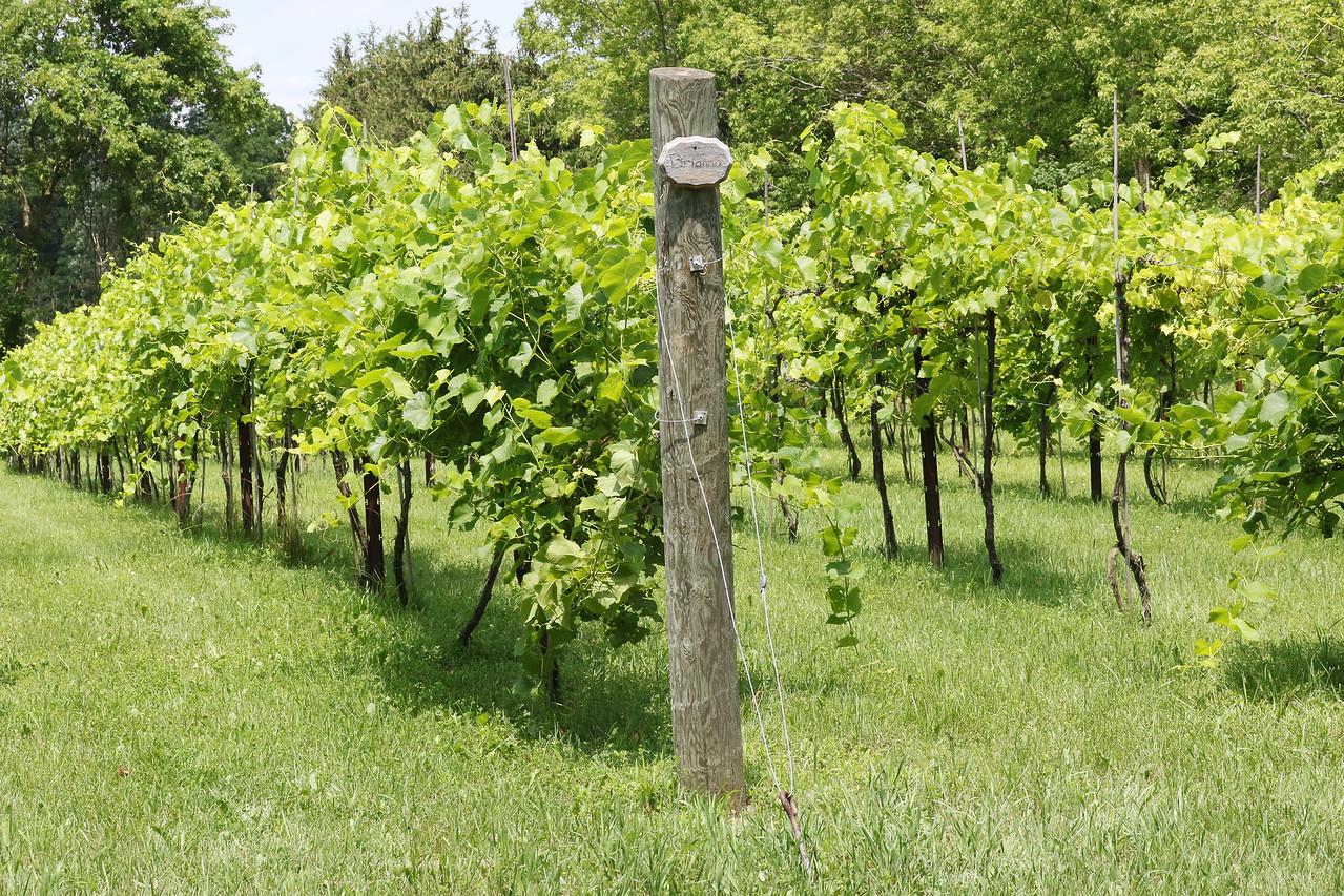 LCJ_0720_Vigneto_delBino_WineryF